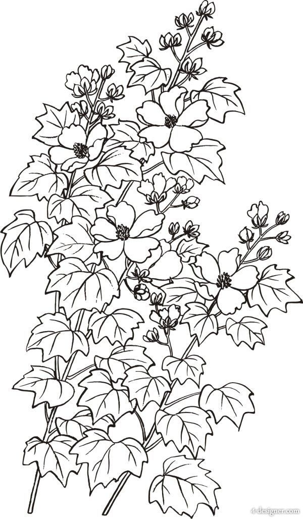 Flower Line Drawing Clip Art Free : Best hybiscus study images on pinterest line art