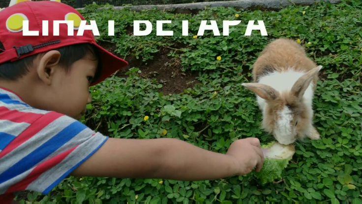 Tingkah Lucu Kelinci-Kelinci di Taman Kelinci Malang