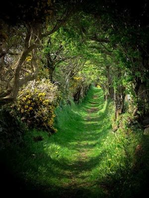 The old road that leads to a ancient stone circle. Ballynoe, Co Down, Ireland
