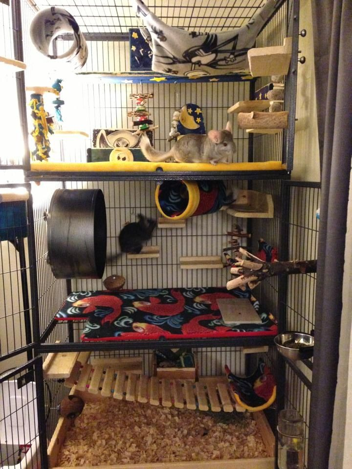 Excellent cage - vertical with lots of room , comfy fleece everywhere, plenty of natural wood to chew, no plastic -