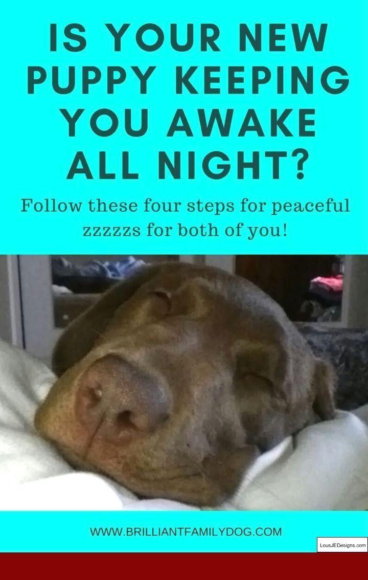 Maltese Dog Training Tips And Pics Of Dog Training Tips Jealousy