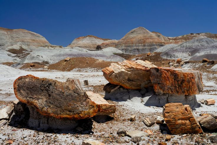 Painted Desert and 20 other reasons to visit Arizona