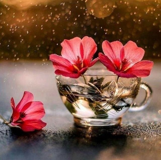 47 Tumblr In 2020 Beautiful Flowers Photography Attractive Wallpapers Beautiful Flowers Wallpapers