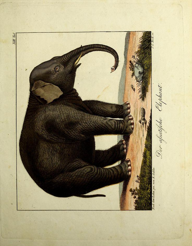 Abbildungen und Beschreibungen merkwürdiger naturgeschichtlicher Gegenstände. By Wolf, Johann, 1765-1824 - Biodiversity Heritage Library