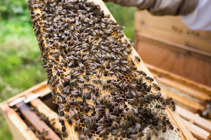 Buying beekeeping supplies doesn't have to be stressful. Discover the best places to buy the beekeeping supplies you need online.
