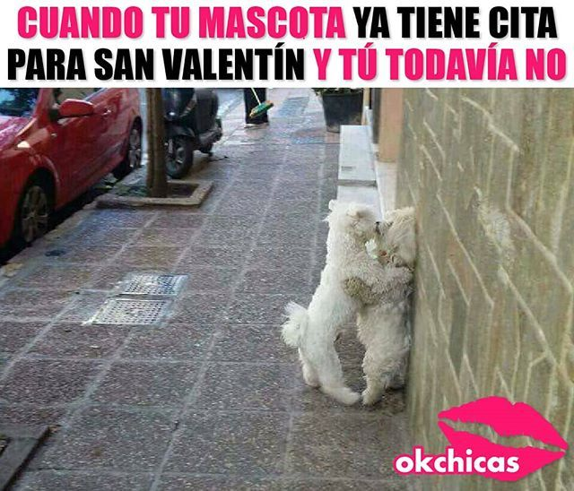 Echenles Agua Calientes Funny Memes Funny Images Lol