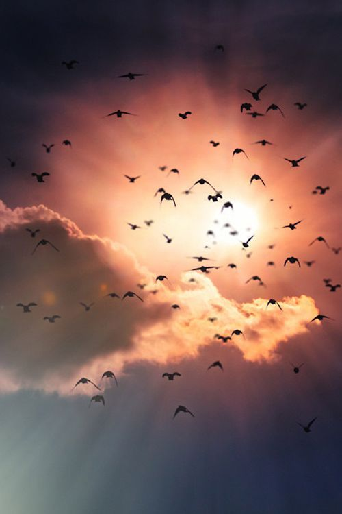 """Makes me think of all my departed loved ones, human and animal....that they """"fly free"""" now in the Heavens......<3"""