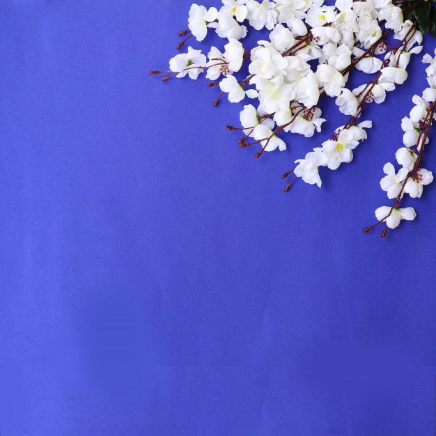 Download Colorful Flowers Background For Free Flower Background Wallpaper Flower Backgrounds Flower Frame