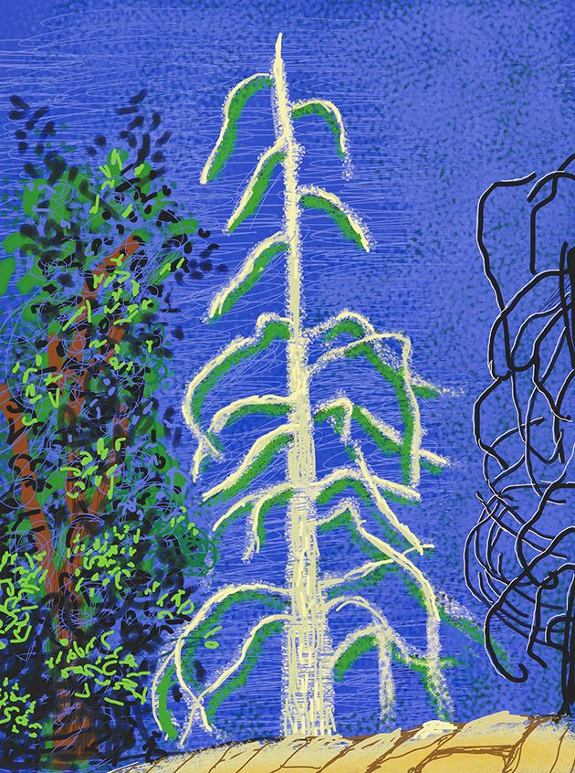"""""""Untitled No. 14"""" from """"The Yosemite Suite"""" Hockney"""