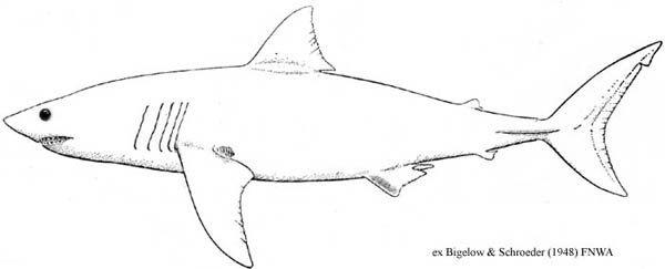 Magic Beach Shark Template Alison Lester Pinterest