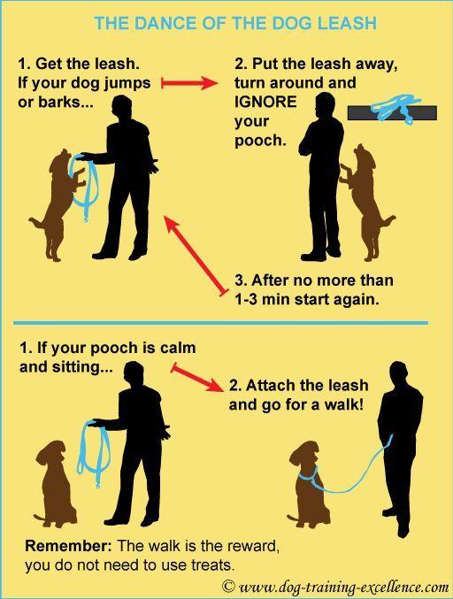 leash training your dog, dance of the dog leash, dog walking tips