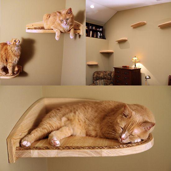 Die 25 besten ideen zu katze kletterwand auf pinterest - Kletterwand katze ...