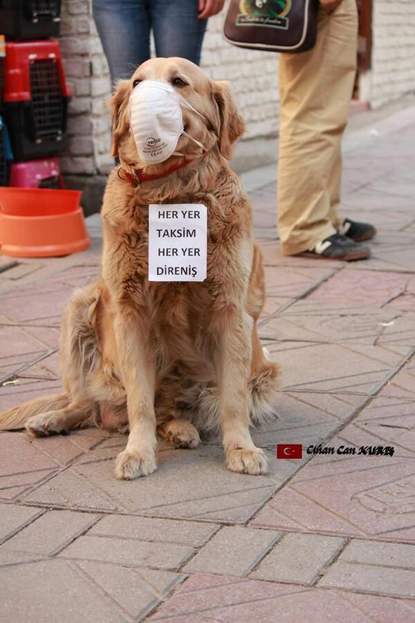 Twitter / Anonymous_wolrd: Remember the cat in Tahrir ...