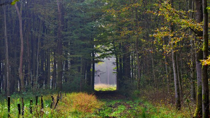 Stig i höstskogen.