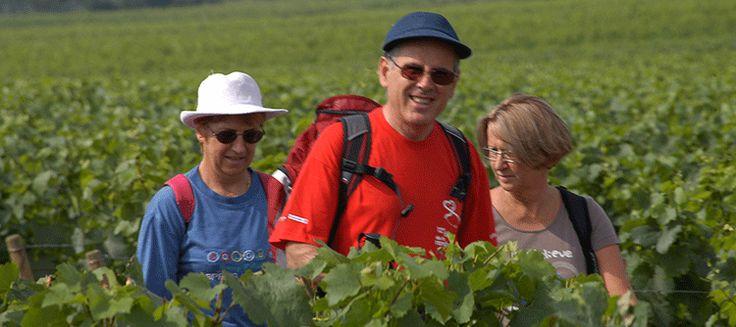 Ultra Trail de Côte-d'Or – Trail des Hautes Côtes- Trail des Vignes – Trail de Marsannay et Trail au Féminin -Marsannay -la-Côte (21)