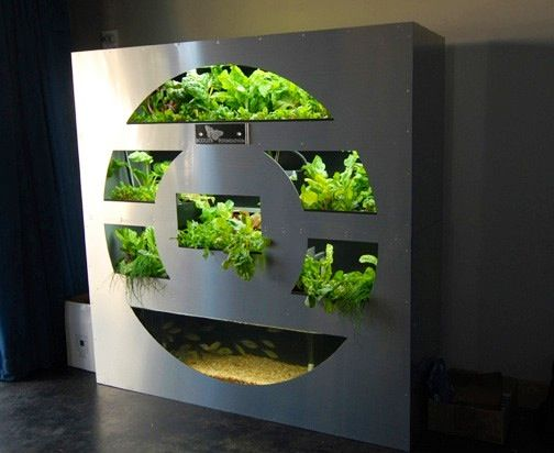 Aquaponics furniture decor pinterest hydroponics for Fish tank hydroponic garden