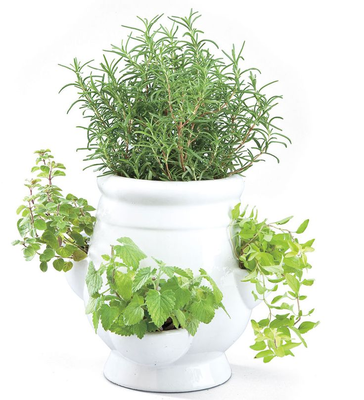 Indoor Culinary Herb Garden Kit – Garden Ftempo