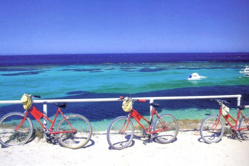 Hire a bicycle and discover the natural beauty, unspoilt beaches and spectacular flora and fauna of Rottnest Island! #celebratewa