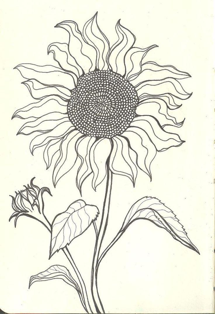 Sunflower Drawings  Sunflower Drawing Tumblr Sad Sunflower By Finwion