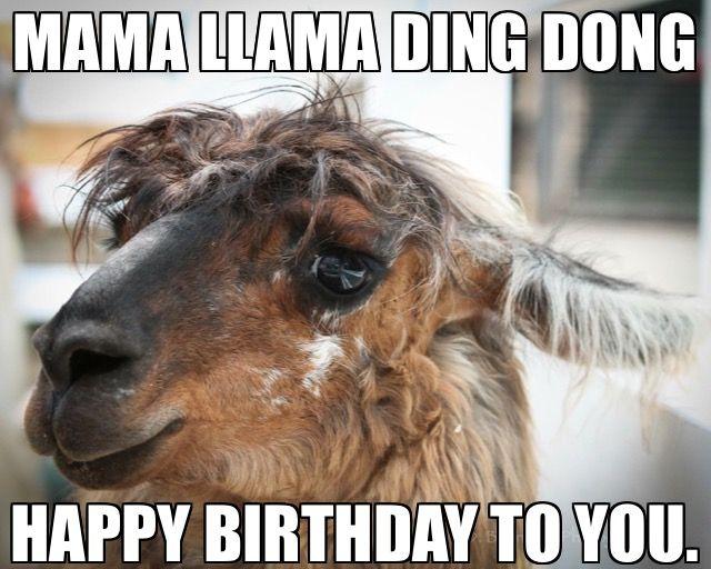 Fa La La La La La La Llama Happy Birthday To You Llama Birthday