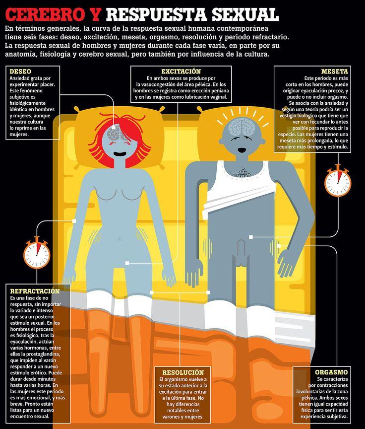 #Infografia Las 6 fases del #Cerebro y la respuesta #Sexual @Candidman