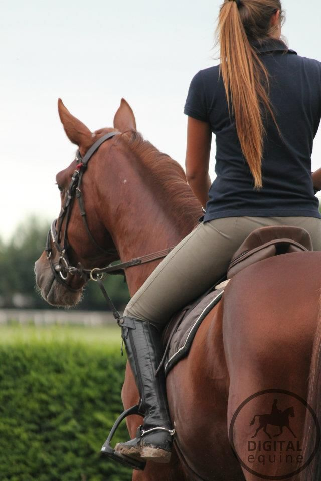 Equestrian Life requires strength, inner & physical to bring your dream to life.  Don't let anyone challenge it.