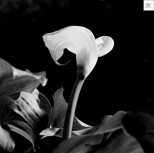 Sally Wellbeloved Photography | Lily
