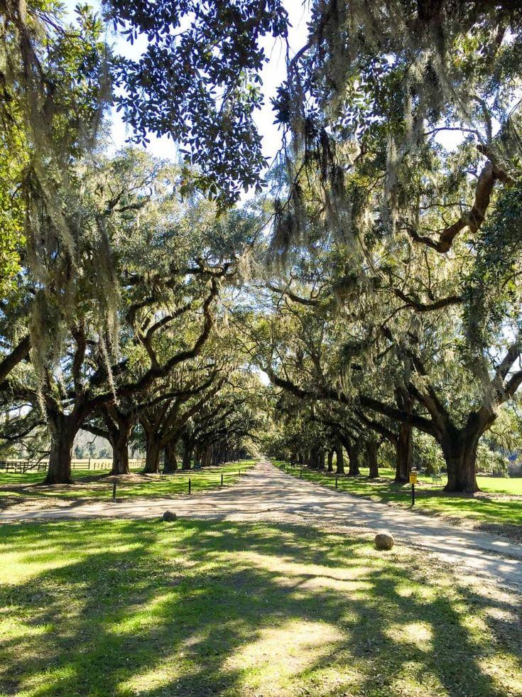 Charleston, SC Charleston vacation, Charleston travel