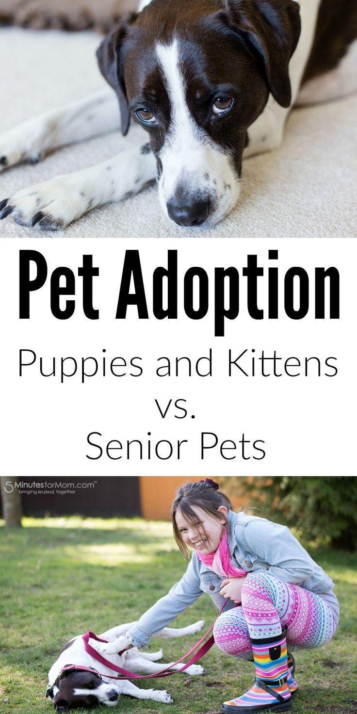 best pets images on pinterest