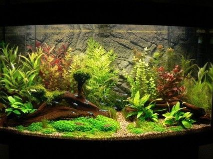 32 best Aquarium verlichting images on Pinterest | Led strip ...