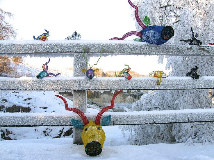 MUM's ZOO: handmade wall trophy's enjoy Finnish nature in - 20 degrees.  Lieto, Nautelankoski rapids, Finland. January 2014.