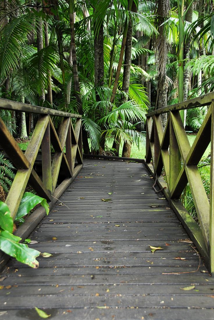 Tamborine Mountain Botanic Gardens #thisisqueensland #seeaustralia #travel2next