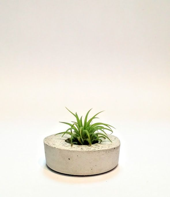 Effie Pots & Co. airplant minimal concrete planter available at Harold + Ferne: The Local Goods Co.