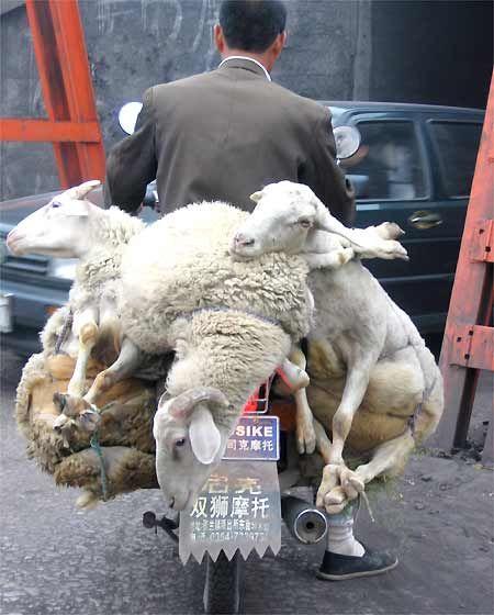Don't let him get your goat.