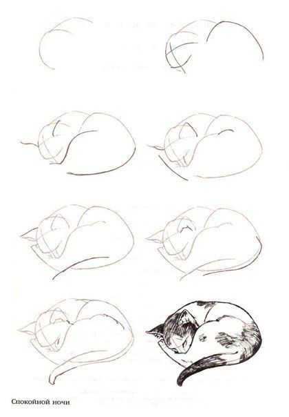 How to draw a sleeping cat                                                                                                                                                                                 Más                                                                                                                                                                                 Más