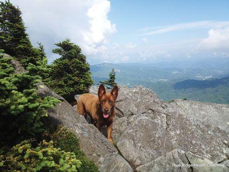 Mountain Dog Photo Contest Winners// 2nd Place: JOSIE