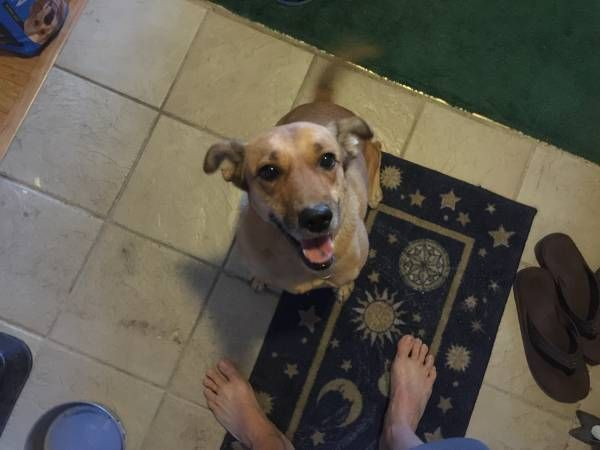 LOST DOG: 07/02/2016 - Paradise, Nevada, NV, United States. Ref#: L32643 - #CritterAlert #LostPet #LostDog #MissingDog