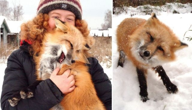 She's Fantastic Miss Fox: The endearing tame animal who thinks she's a pet dog