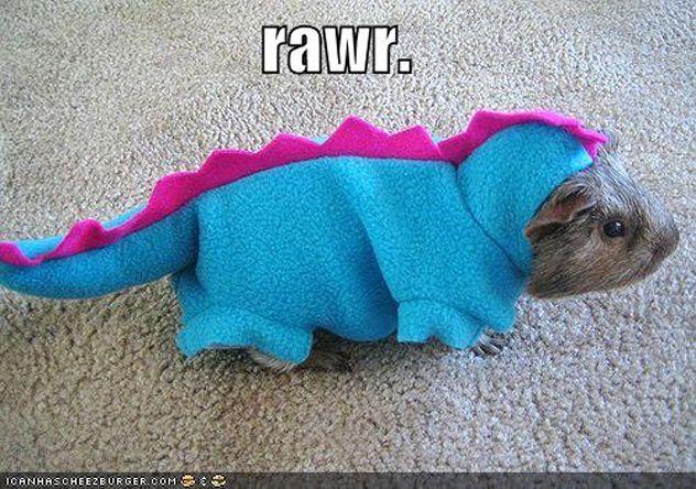 whaaaat!? Guineapigasaur?: Dinosaurs Costumes, Dino Costumes, Pet, Guinea Piggy, Funny Stuff, Funny Animal, Guniea Pigs, Guineapig, Guinea Pigs