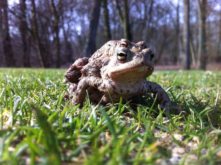 #france #frogs #golf #green #hobbies #landscape #lawn #nature #sport #turf