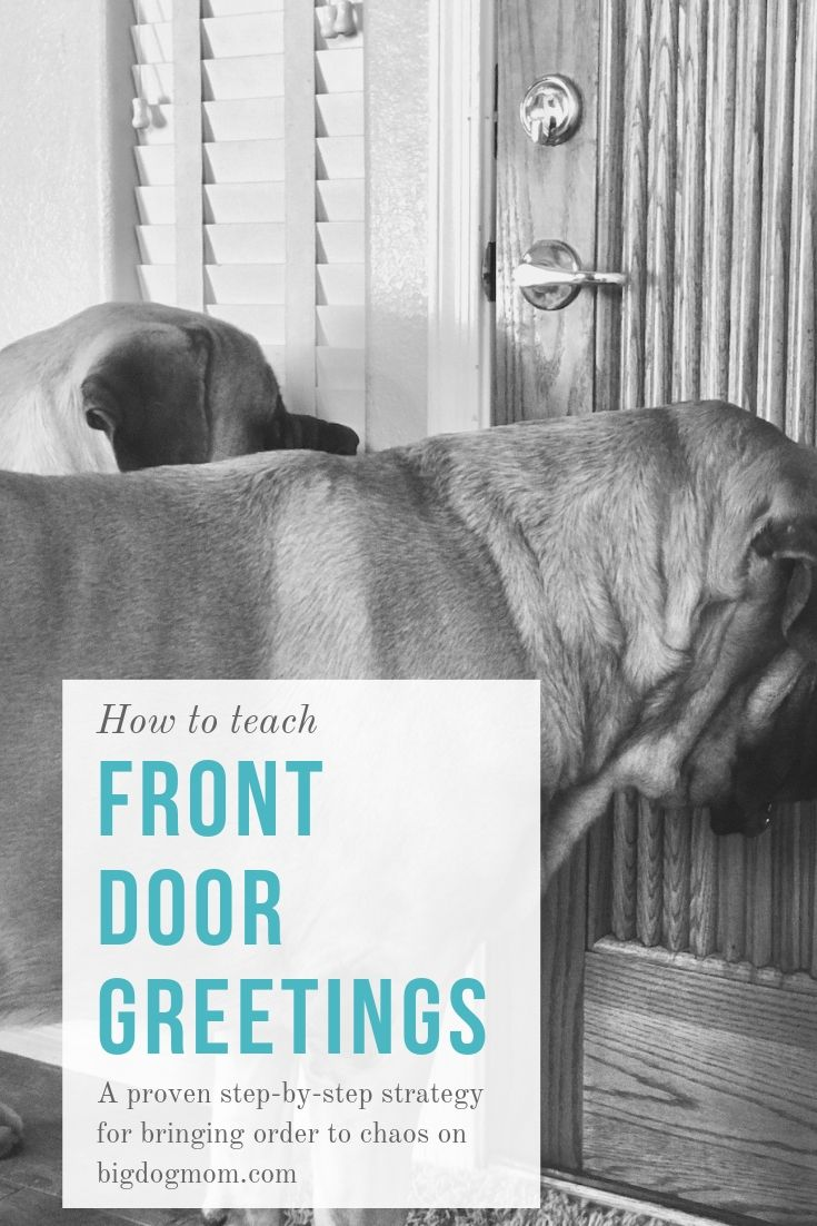 Front Door Greetings Bringing Order Back From Mayhem Dog