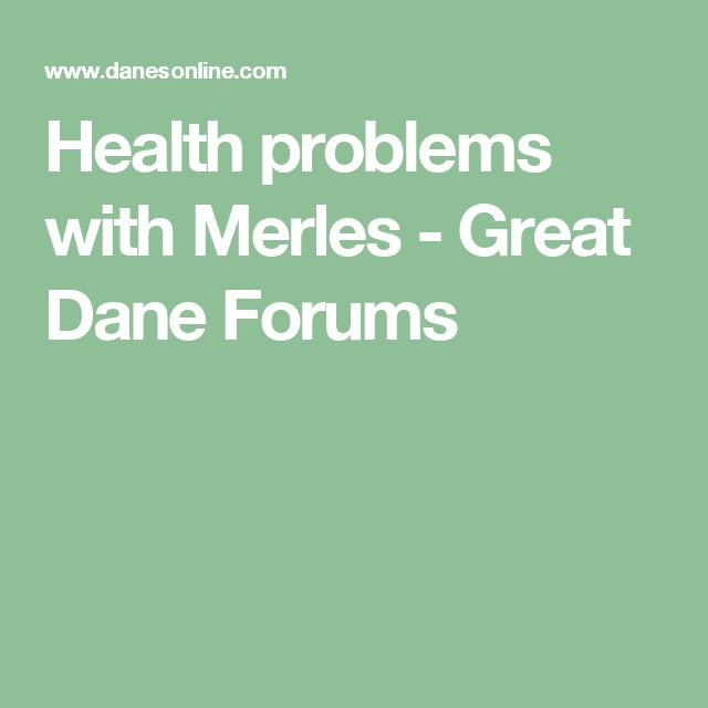 Health problems with Merles - Great Dane Forums