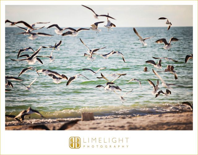 Lido Beach Resort, birds, beach, Wedding, Limelight Photography www.stepintothelimelight.com