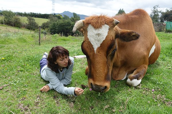 Baby Calf Destined to Become Veal Gets the Most Incredible Happy Ending Thanks to Rescuers