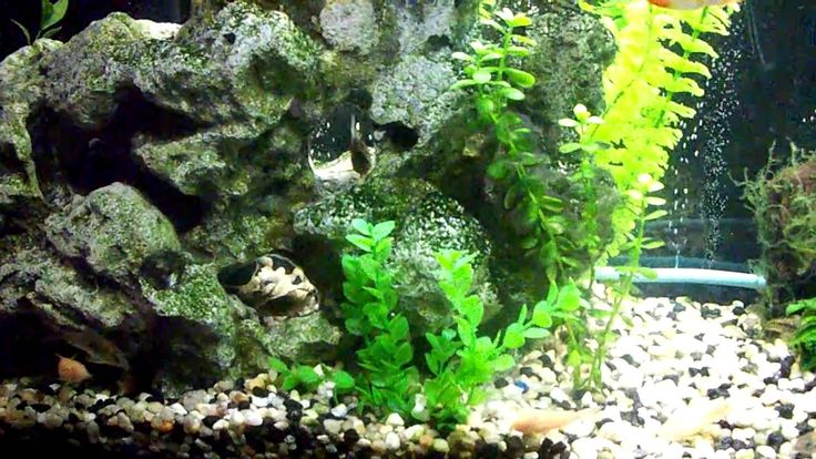 17 best images about aquaria on pinterest tropical fish for Best community fish