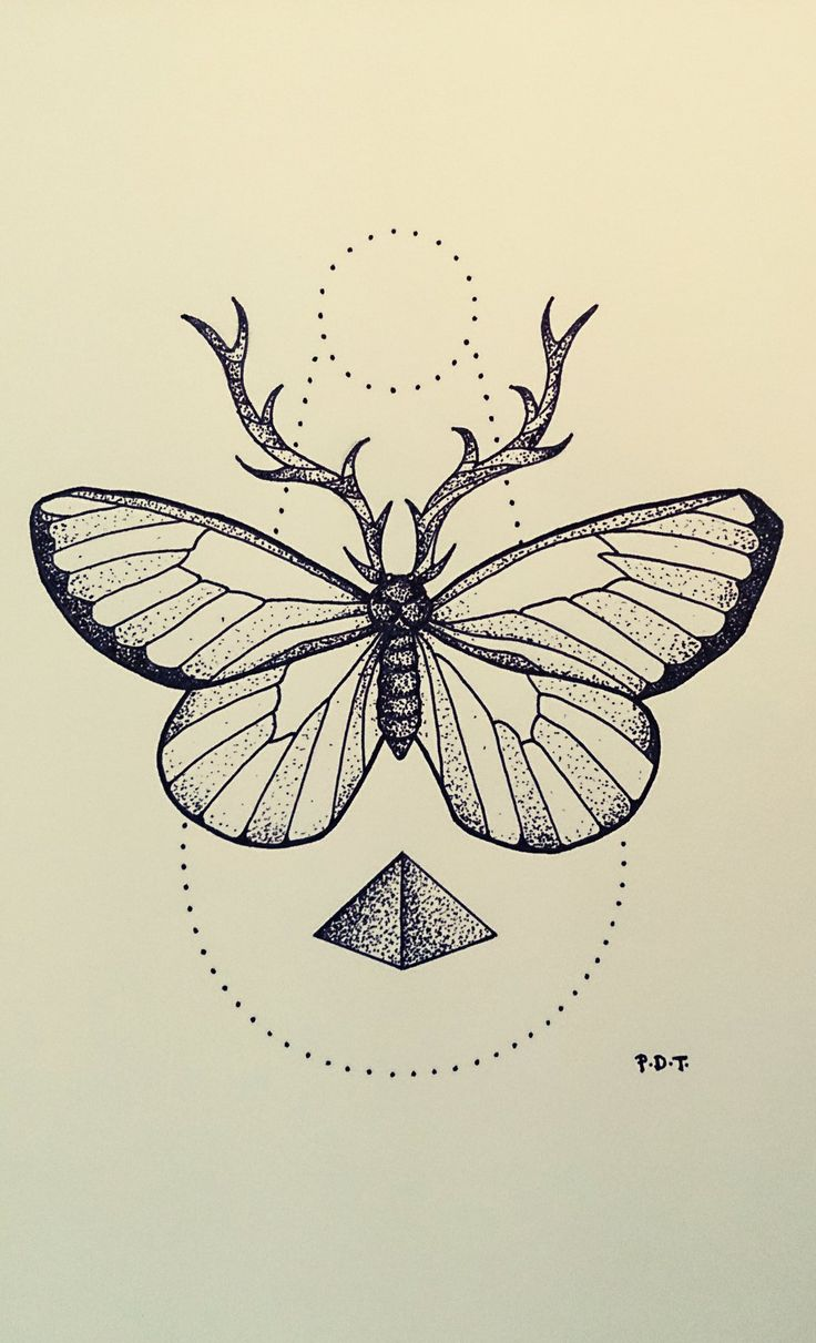 Butterfly by Aephylis on DeviantArt