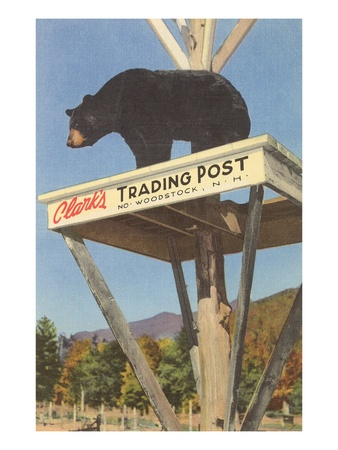 Bear, Clark's Trading Post, Woodstock, New Hampshire Premium Poster