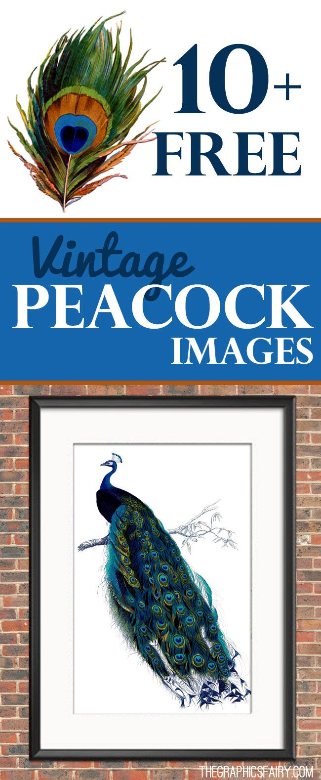 10 Free Vintage Peacock Images! Graphics Fairy. So many beautiful free vintage Peacock graphics to print and use in craft projects and DIY Home decor. Or make your own Printables! Vintage Freebies!