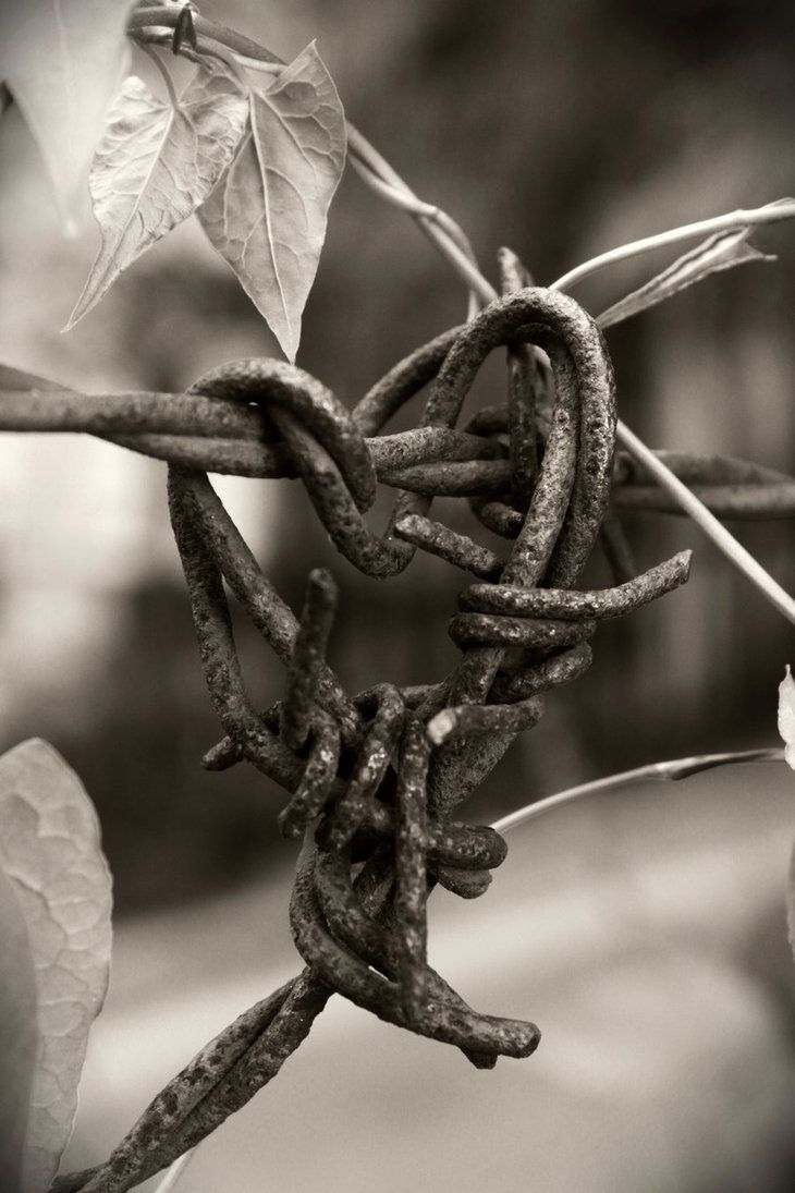 Barbed wire I