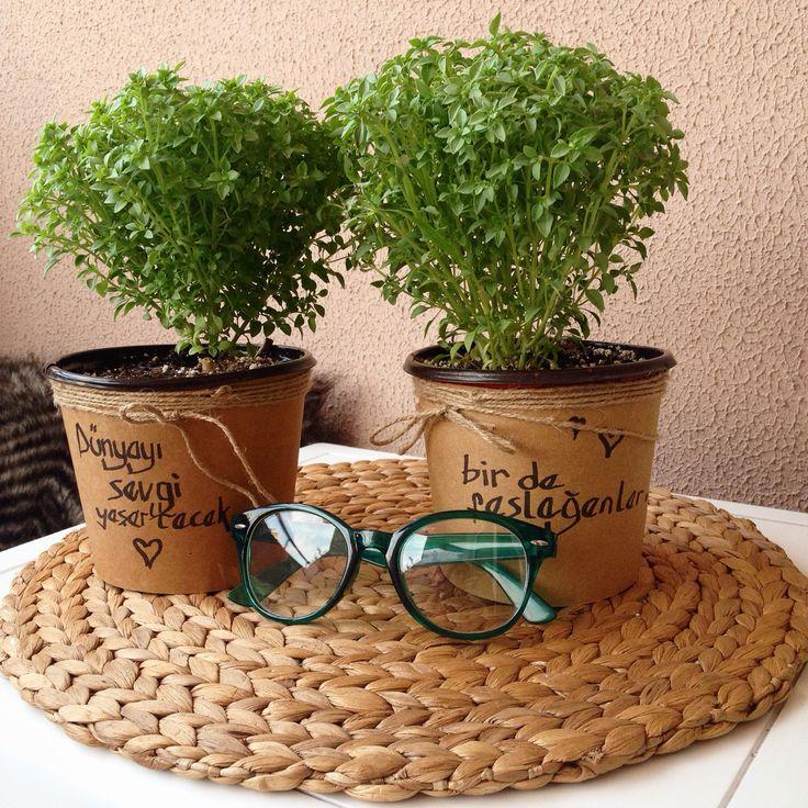 Plants & fesleğenler